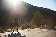 Cattle herding on the Mirror Lake Scenic Highway, Samak, Utah.