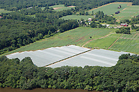 Shadegrown tobacco fields along the Connecticut River, near Agawam, MA