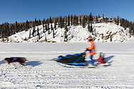 Musher competing in the 45rd Iditarod Trail Sled Dog Race on the Chena River after leaving the restart in Fairbanks in Interior Alaska.  Afternoon. Winter.