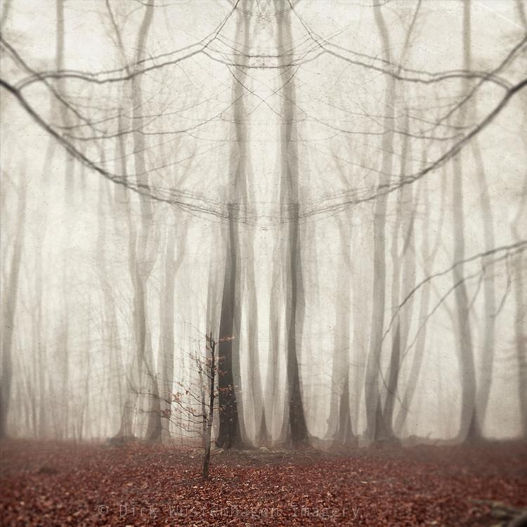 Foggy forest scenerey