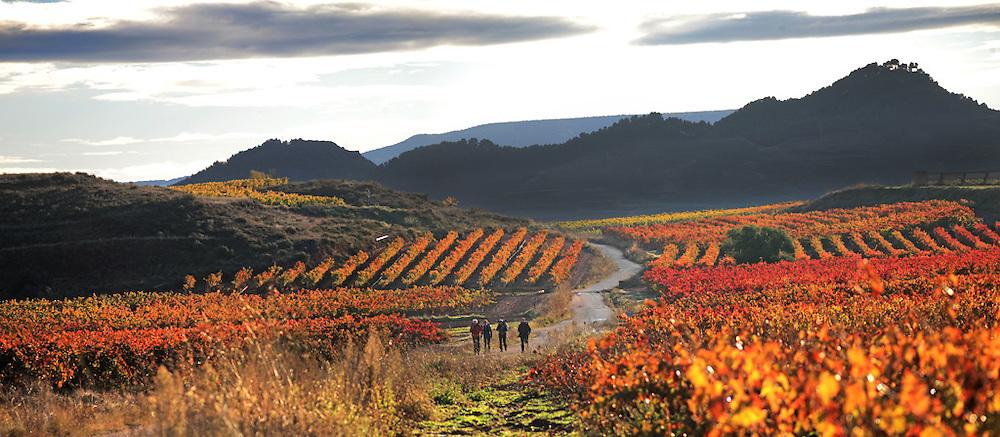 Viñedos. Najera. LA Rioja ©Daniel Acevedo / PILAR REVILLA