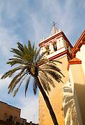 Date palm tree and tower of Basilica de la Macarena, Barrio Macerana, Seville, Spain