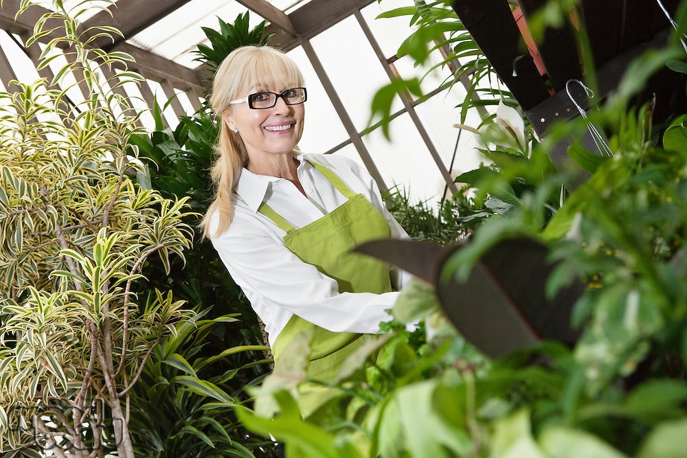 Portrait of a happy senior gardener cultivating plants in greenhouse