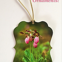 Pink Lady's Slipper Ornament<br /> Single Sided - White on Back<br /> Photographic Print on Thick Acrylic Stock. Proudly Made in USA