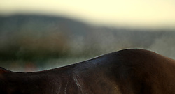 Steam on a horse after a race during day one of the November Meeting at Cheltenham Racecourse, Cheltenham