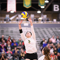 2nd year setter Satomi Togawa (5) of the Regina Cougars in action during Women's Volleyball home game on November 17 at Centre for Kinesiology, Health and Sport. Credit: Arthur Ward/Arthur Images