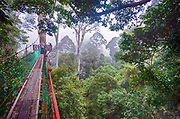 The canopy walkway in the dipterocarp rainforest of Danum Valley, Sabah, Borneo.