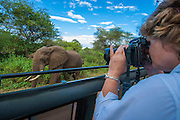 Safari visitor photographs elephant, Lake Manyara National Park, Tanzania