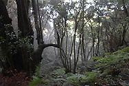forest on la palma