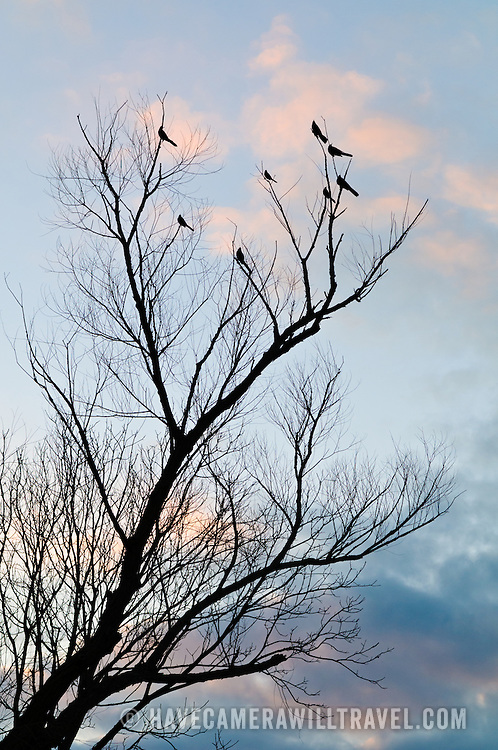 Birds sit on a bare tree's branches in the late afternoon, silhouetted against the darkening sky