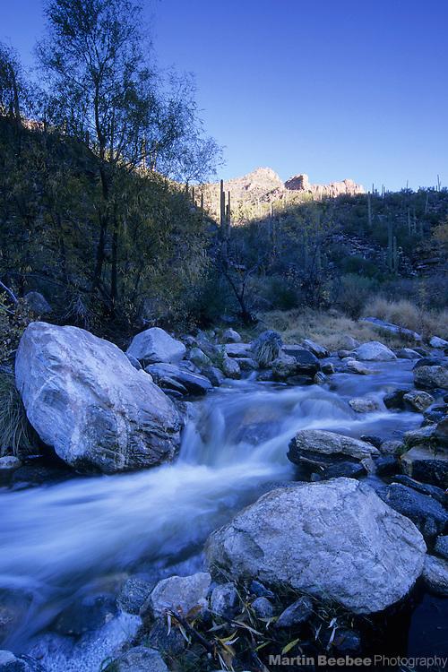 Sunlit ridge above Bear Creek, Bear Canyon, Coronado National Forest, Arizona