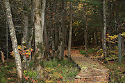 This path leads to Canyon Falls, one of the truly impressive waterfalls on Upper Michigan's Sturgeon River.