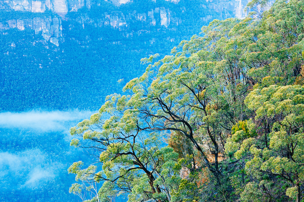 Trees cling to the sandstone escarpment above the Grose Valley in the Blue Mountains National Park.