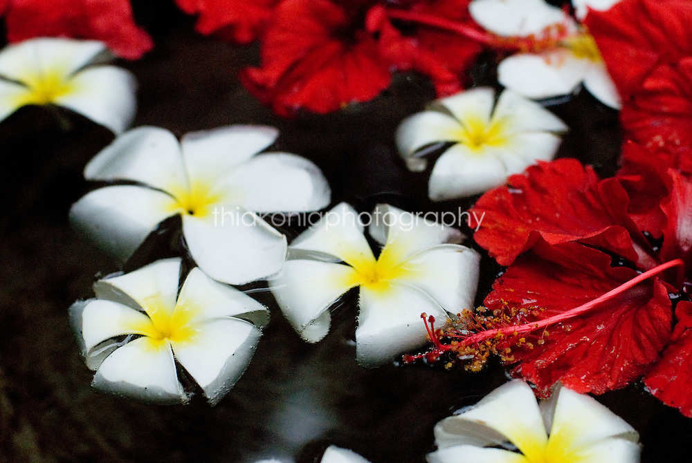 White and red flowers float in water, placed there for the morning offering, Bali.