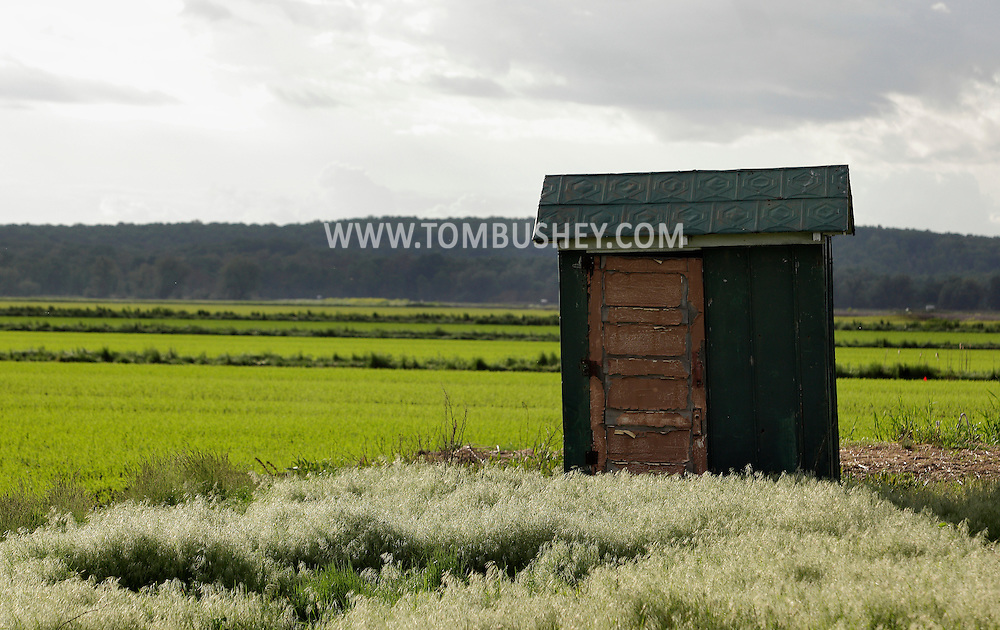 Goshen, New York - Sunlight illuminates an outhouse and and farm fields in the Black Dirt region on May 21, 2011.