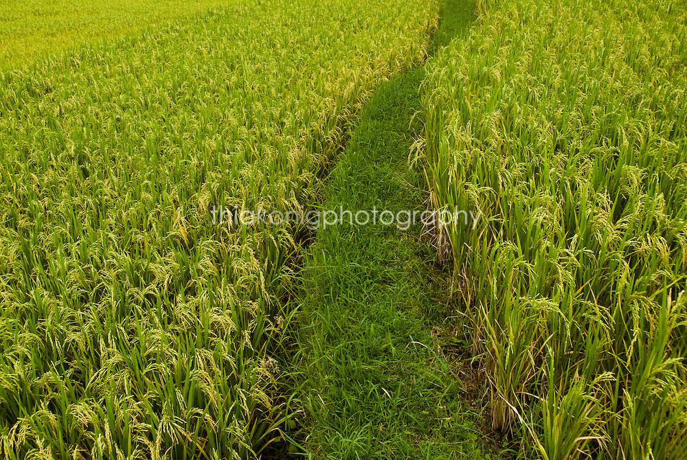 Detail of rice paddy design, Ubud, Bali