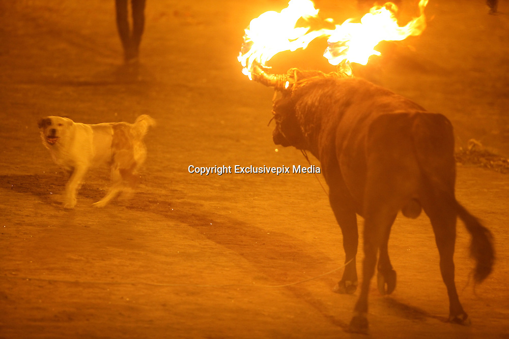 Jan. 30, 2016 - Mira, Carchi, Ecuador - <br /> <br /> Horror at Spanish festival where live animals are set on fire:<br /> <br /> Writhing and snorting in a demonic rage, a burning bull charges out of the darkness as if sent straight from the depths of Hell.<br /> This is not some apocalyptic vision from medieval folklore, but the Spanish festival where live bulls are set on fire and let loose about a village's streets for entertainment.<br /> Disturbing new images have emerged of this annual Spanish bull burning festival which animal rights campaigners are demanding be banned.<br /> The Joy of the Bull - or Toro de Jubilo - is one of the 'cultural' highlights of Medinaceli village, northeast of Madrid<br />  Every year a young bull is dragged into a ring before its body is covered with mud to protect it from burns<br /> Participants then strap wooden stakes doused in flammable chemicals to its horns, and set it on fire,Fiercely hot sparks and embers drip from the burning torches onto the animal as men torment it to prove bravery<br /> ©Exclusivepix Media