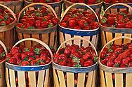 Strawberries for sale in outdoor market, Lisle S-La-Sorque de Provence, France
