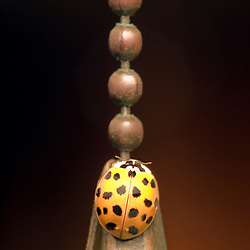"""Camouflaged""-Ladybug on lamp pull chain."