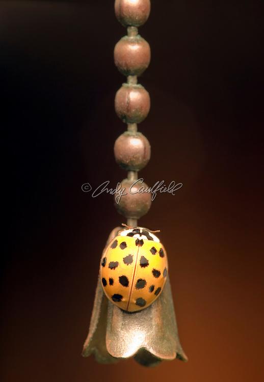 """Camouflaged""-Ladybug on lamp pull chain."