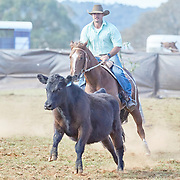 Dorrigo Campdraft 2018, Dorrigo, New South Wales, Australia