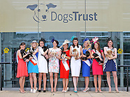 Dogs Trust Rose of Tralee