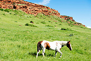 Bighorn Canyon National Recreation Area, Crow Indian Reservation, Paint Horse, Montana