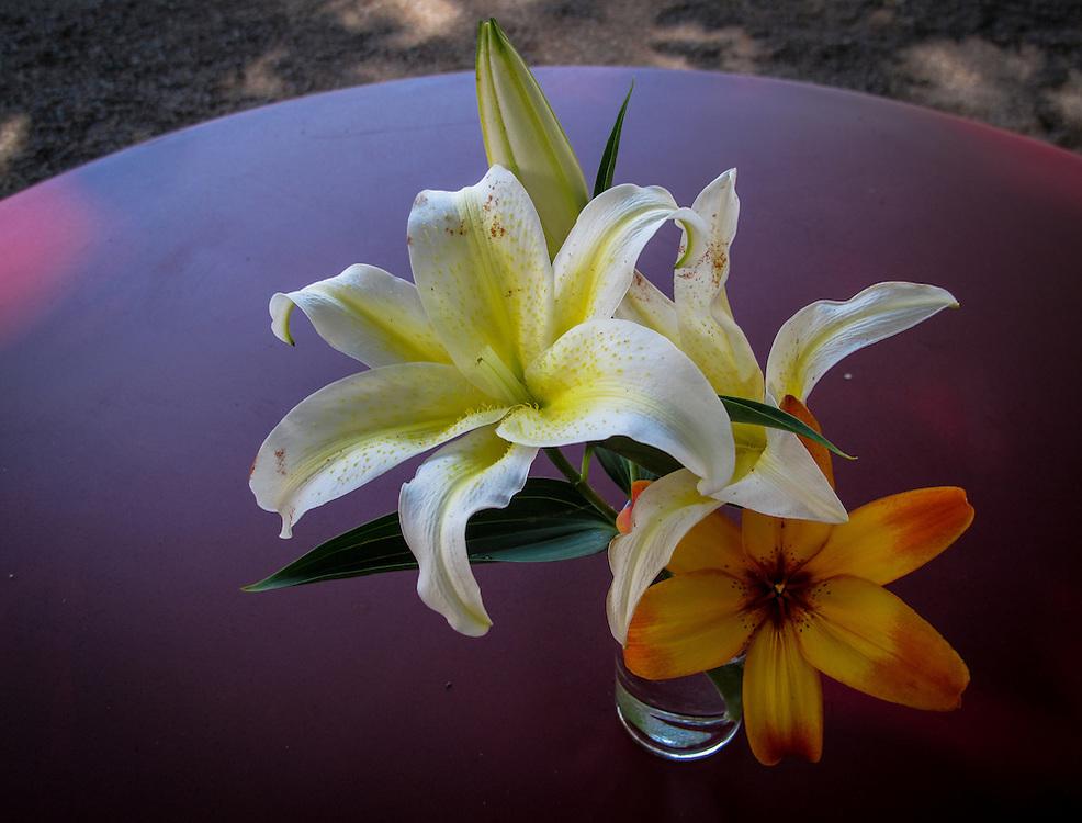 Blommor på Tetley under Almarna i Kungsträdgården