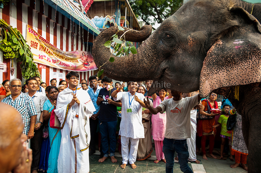 29th August 2014, Sarojini Nagar, New Delhi, India. Ecstatic devotees welcome female elephant Gulabo for Gaja (elephant) pooja at the Sree Vinayaka Mandir in New Delhi, India on the 29th August 2014. <br />