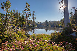 """Wildflowers at Loch Leven Lakes 1"" - Photograph of wildflowers at High Loch Leven Lake in the Tahoe National Forest."