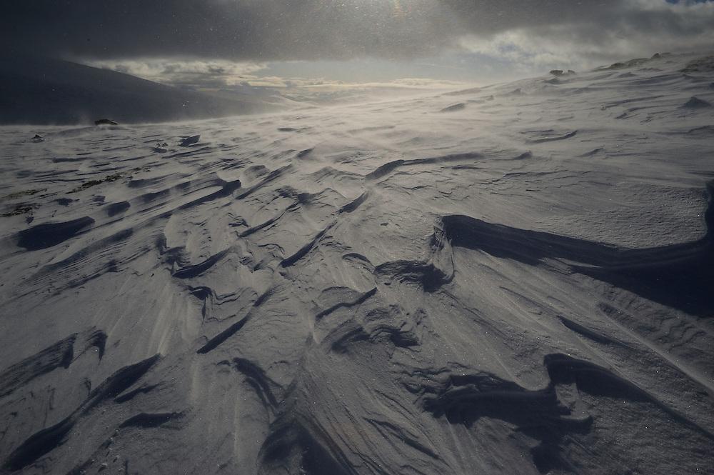 dovrefjell national park , norway, february,.