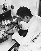 World Health Organisation fighting an epidemic of Influenza.  Scientist injecting a specimen into an egg. Growth of the  virus in the embryo confirms a diagnosis of Flu.