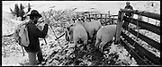 Schafscheid auf Geissalp, Schwazsee, Freiburg, Switzerland. Sheep gathering at Geissalp, Fribourg. Traditional alpine farming and gathering in Switzerland, Alpine Landwirtschaft in der Schweiz, agriculture de montagne en Suisse. © Romano P. Riedo | FOTOPUNKT.CH