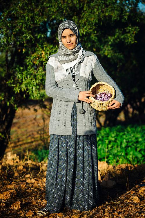 TALIOUINE, MOROCCO - October 27th 2015 - Portrait of a saffron farmer holding a basket of crocus sativus flowers at a saffron farm in Taliouine, Sirwa Mountain Range, Souss Massa Draa,   Southern Morocco