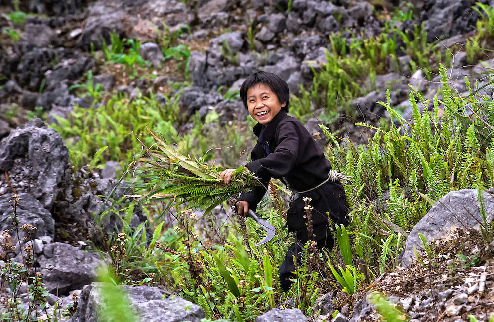 A boy harvesting ferns to be used as fodder in Ha Giang, Vietnam.