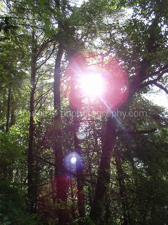 Sunlight through trees in Cork Ireland