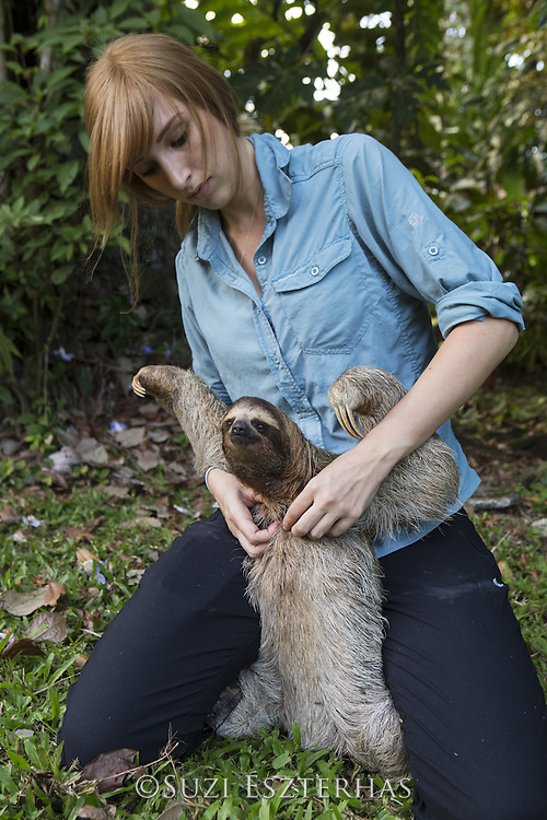 Brown-throated Three-toed Sloth <br /> Bradypus variegatus<br /> Rebecca Cliff, sloth biologist, fitting sloth with sloth backpack<br /> Aviarios Sloth Sanctuary, Costa Rica<br /> *Model release available