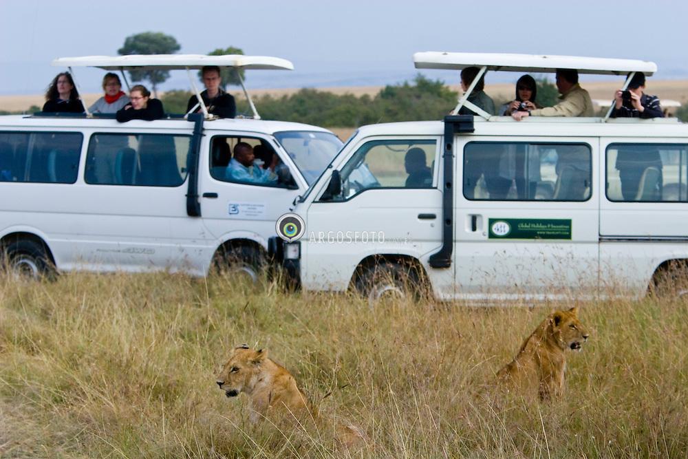 Tourists in a safari watching a lion family with 2 female at Masai Mara reserve, in south-western Kenya / Turistas observam leoas na Reserva Nacional Masai Mara, o mais famoso parque nacional do Quenia,  situado no  Vale do Rift.
