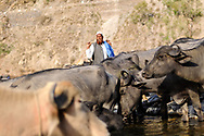 Yusuf with his herd, along the Yamuna River.