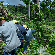 JULY 19, 2018----UTUADO, PUERTO RICO---<br /> A crew from  the Puerto Rico Electric Power Authority pulls a fallen line while restoring power to a single family home.<br /> (Photo by Angel Valentin/Freelance)