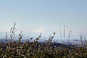 Mount Fuji seen from Kamakura prefecture Japan