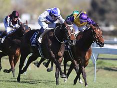 Hastings-Races, Windsor Plate