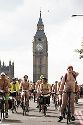 Westminster Bridge, London, June 11th 2016. Hundreds of naked and semi-naked cyclists participate in the World Naked Bike Ride that takes place in cities around the world, to highlight the alternatives to hydrocarbon fuels. PICTURED: Big Ben towers over the naked cyclists as they cross Westminster Bridge.