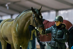 Barbancon Mestre Morgan, ESP, Sir Donnerhall II Old<br /> Jumping Mechelen 2019<br /> © Hippo Foto - Sharon Vandeput<br /> 27/12/19