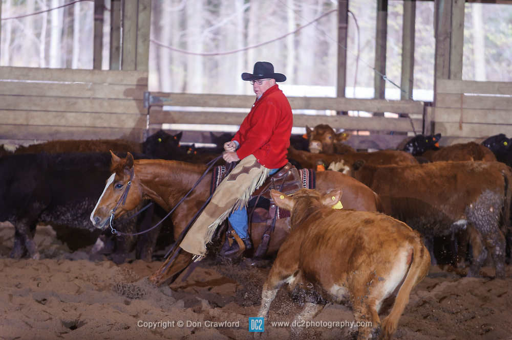April 30 2017 - Minshall Farm Cutting 2, held at Minshall Farms, Hillsburgh Ontario. The event was put on by the Ontario Cutting Horse Association. Riding in the Non-Pro Class is John Koop on Head Cat owned by the rider.