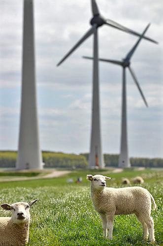 Nederland, the Netherlands, Urk, 9-5-2017 NOP Agrowind, energiebedrijf RWE Essent en Westermeerwind exploiteren een windpark op land en in het water van het IJsselmeer. De stroomproducent bouwde hier windmolens die 5 megawatt op land, en 3 megawatt op zee produceren. Siemens leverde turbines.  FOTO: FLIP FRANSSEN
