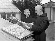02/09/1954<br />