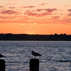 Seagulls at sunrise on a pier in the Connecticut River in Old Saybrook, Connecticut.