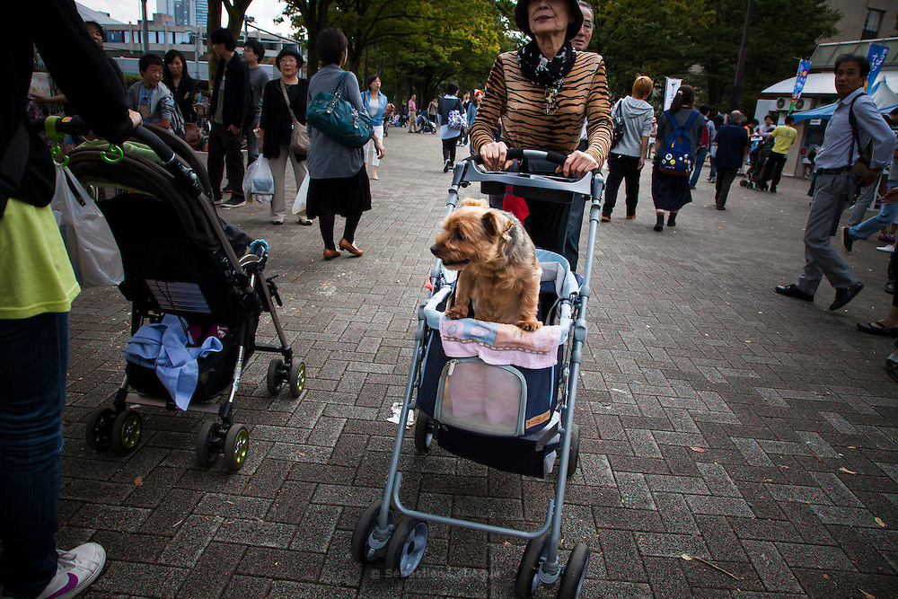 TOKYO, JAPAN, 8 OCTOBER - - Man with his small dog wearing red and white dots's chothe in the Yoyogi park in Shibuya - October 2012 [FR] Un homme et son chien portant une tenue rouge a poids blanc dans le park de Yoyogi
