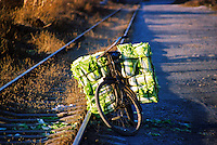 """China, Taiyuan, 2003. A farmer's bike holds the last of the day's pickings of """"bai cai,"""" or cabbage, near an abandoned railway in Taiyuan.."""